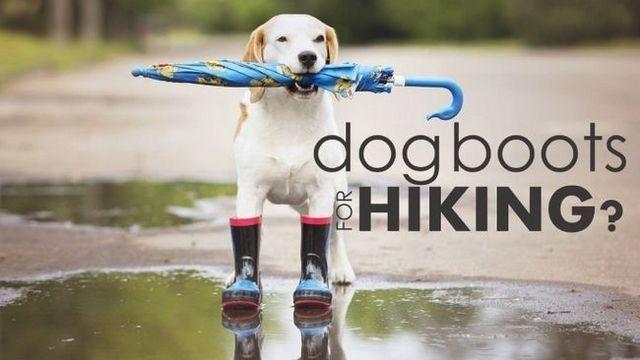 Las mejores botas de perro para el senderismo: evitar dolorosos recortes en su próxima caminata