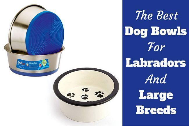 Mejor perro cuencos de labradores y otros perros grandes