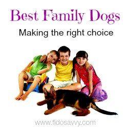 Las mejores razas de perros para las familias