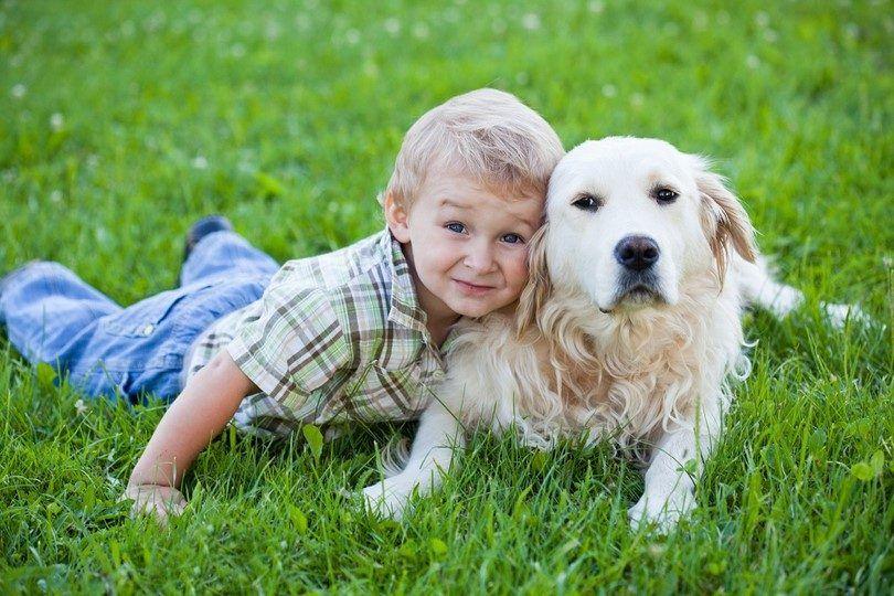 Las mejores razas de perros para los niños: qué tener en cuenta al tomar mascota para su hijo