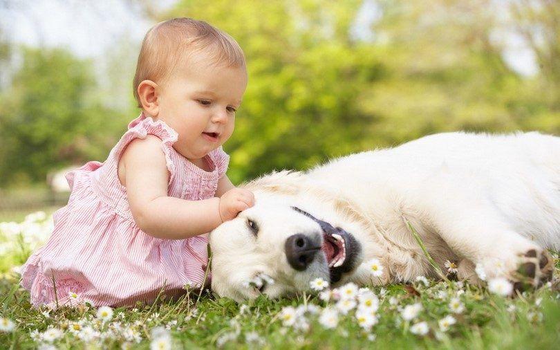 BebГ© que juega con un perro