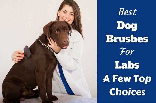 Mejor cepillo de perro para laboratorios - un vistazo a algunas opciones principales