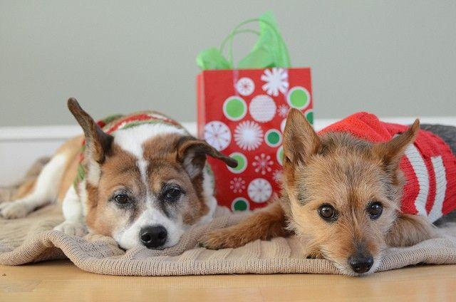 Los mejores regalos de Navidad del perro e ideas del regalo
