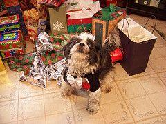 Los mejores regalos de Navidad Perro y regalo Idea