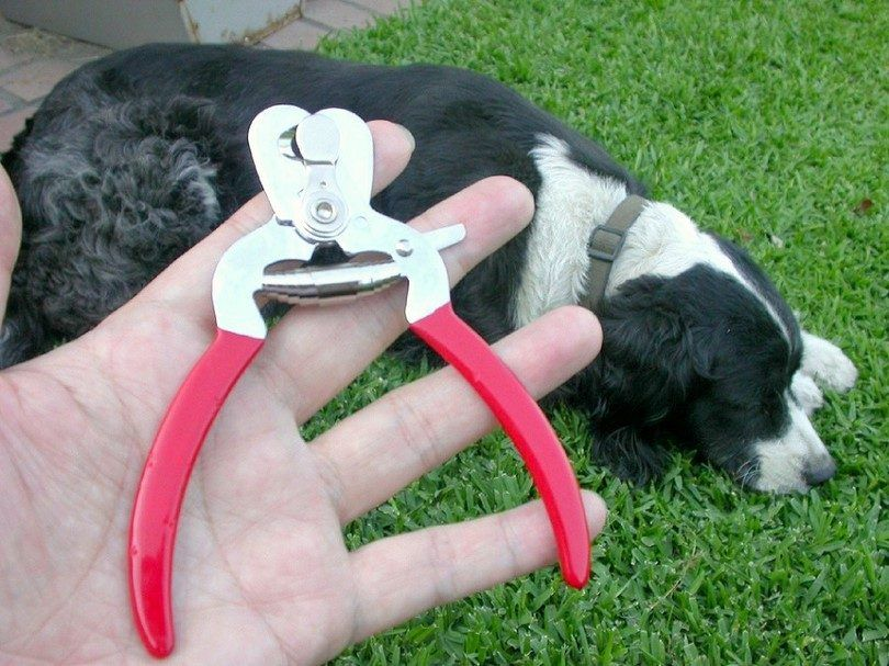 cortaúñas para perros