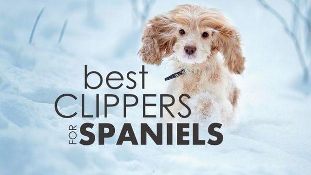 Las mejores máquinas de cortar el perro de aguas de cocker: 5 increíbles herramientas para recortar ese perrito!
