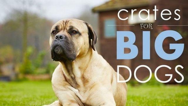Las mejores cajas de perro para los perros grandes: 5 grandes, cómodas