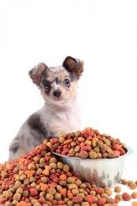 Las mejores ofertas de comida para perros Esta Navidad