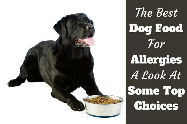 La mejor comida de perro para las alergias: el tratamiento se inicia desde el interior