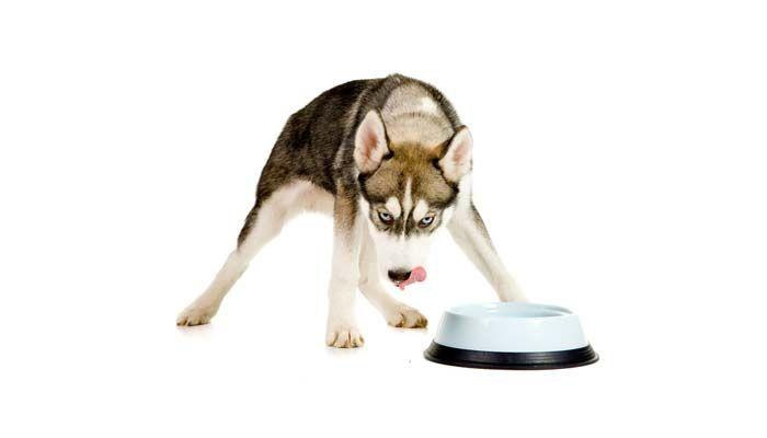 La mejor comida de perro para los perros esquimales y otros perros