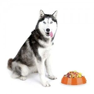 La mejor comida de perro Husky