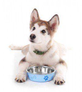 La mejor comida de perro para los perros esquimales de Mascotas