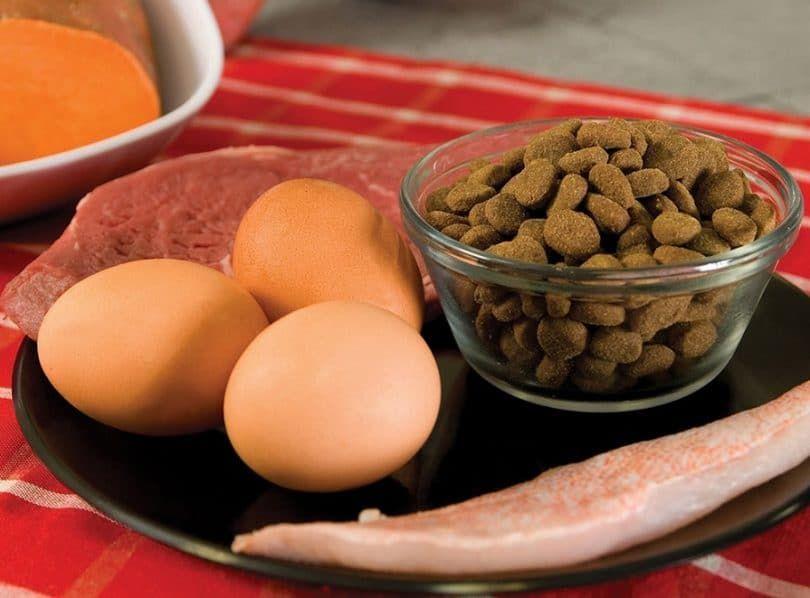 Alimentos para pitbulls
