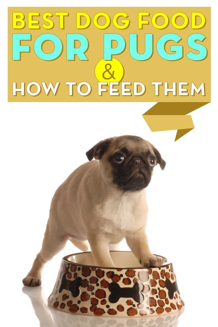 La mejor comida de perro para los barros amasados y Cómo alimentar