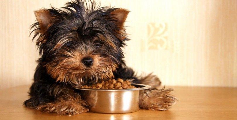 Perro que come su comida