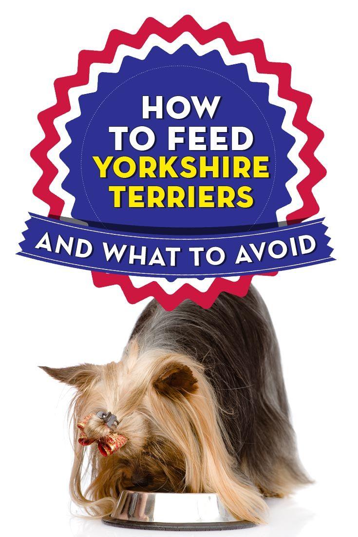 La mejor comida de perro para Yorkies Terries