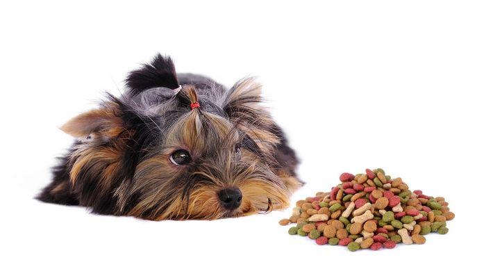 La mejor comida de perro para Yorkies