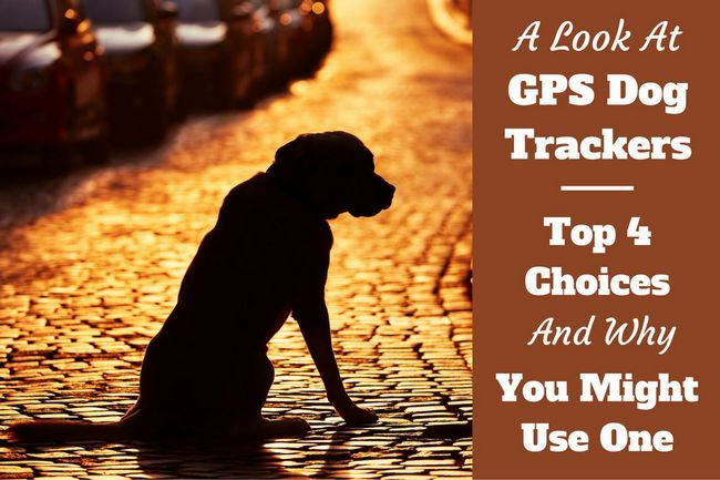 Mejor perro gps rastreadores y localizadores para mascotas - guía de compra y comentarios
