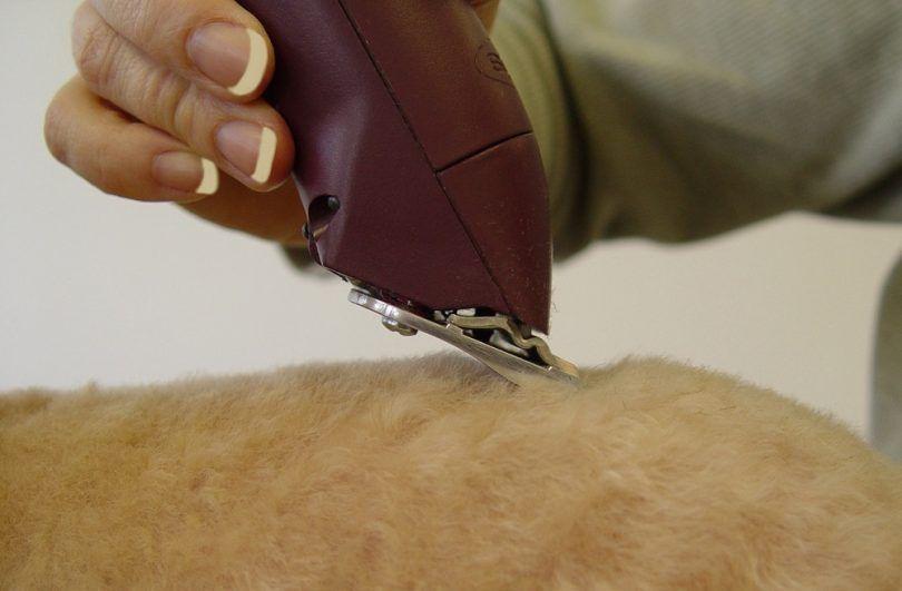 podadoras de la preparación del perro
