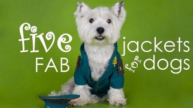 Las mejores chaquetas de perros: 5 (segundo) abrigos elegantes y prácticos