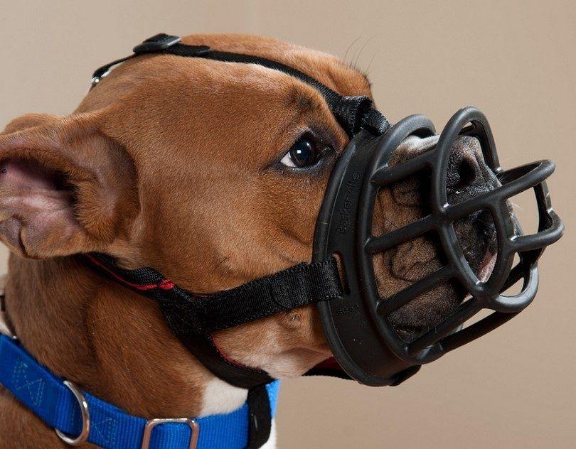 Mejor hocico del perro: cómo elegir un producto para las necesidades de su perro