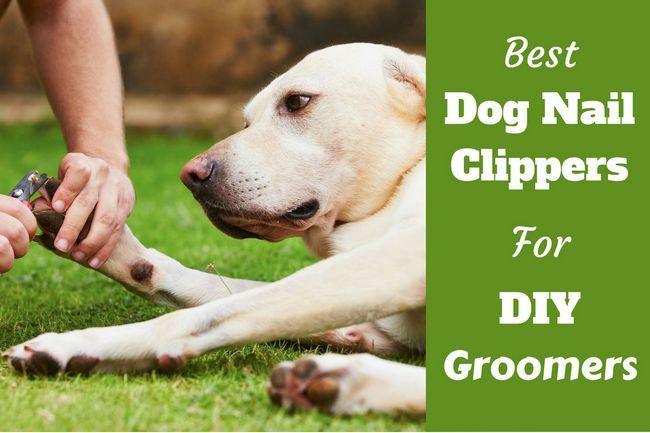 Mejores cortaúñas perro para peluqueros de bricolaje - top 4 en 2016
