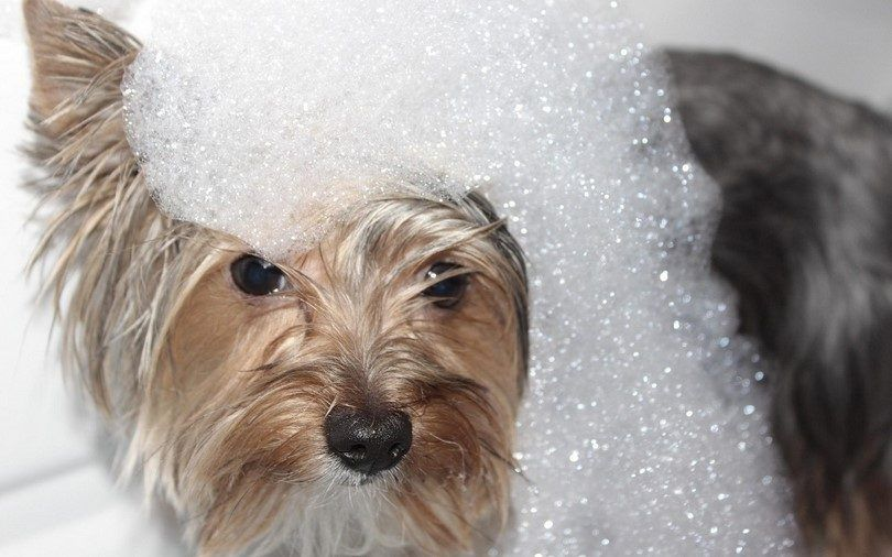 Perro con champú
