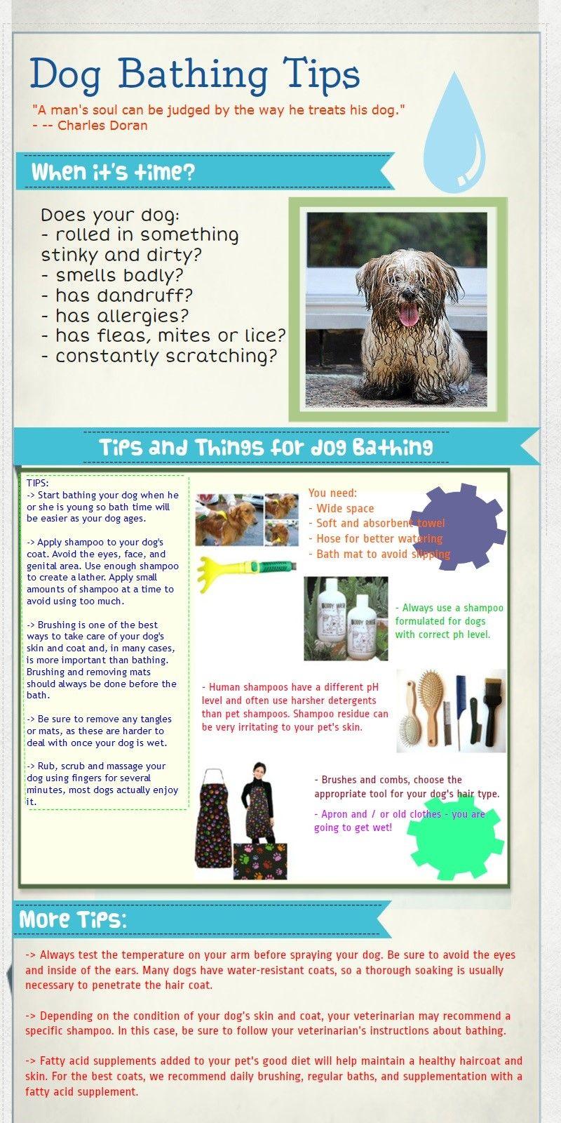 consejos de baño para perros