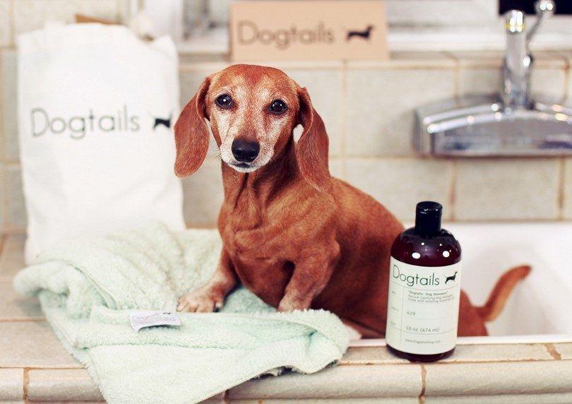Perro antes del baño