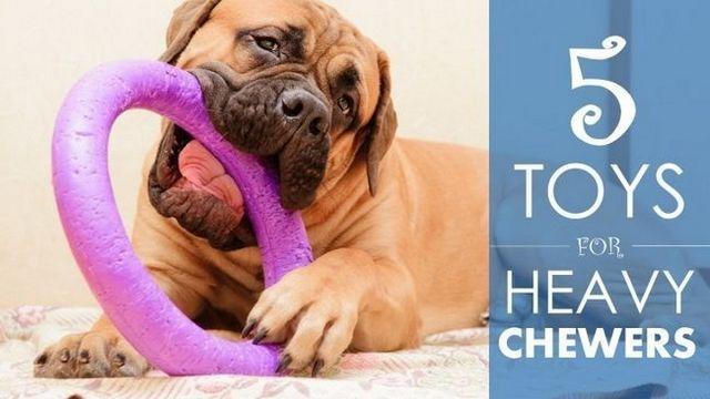 Los mejores juguetes para perros para masticadores pesados: 5 opciones duraderos (y un poco de asesoramiento ...)