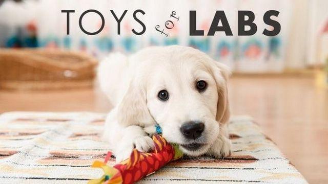 Los mejores juguetes para perros para laboratorios: juguetes de calidad para laboratorios dura aburridos