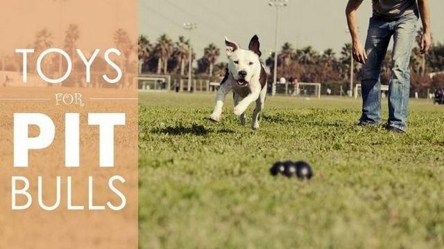 Los mejores juguetes del perro para pitbulls: 5 juguetes fuertes que pueden hacer frente a la pena de su fosa