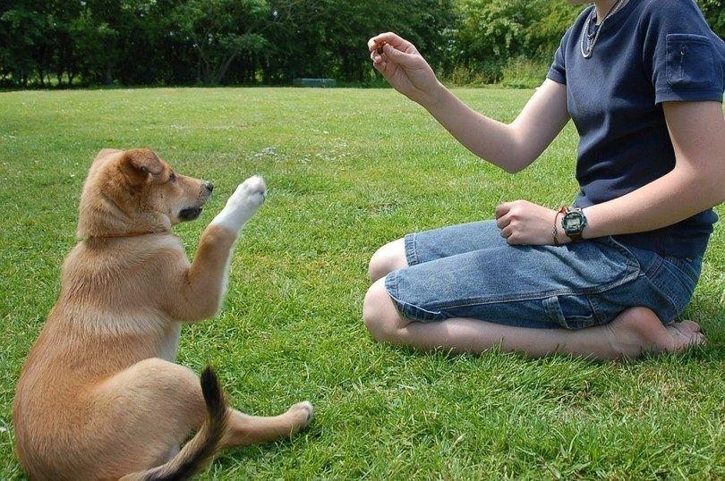El uso de golosinas para perros
