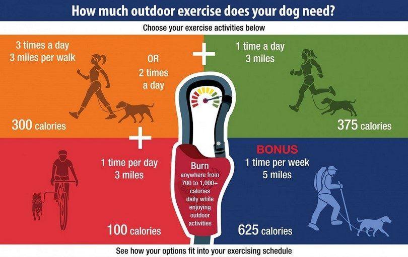 Ejercicio al aire libre para su perro
