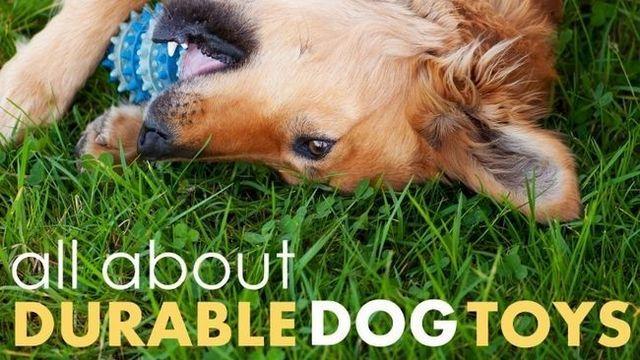 Los mejores juguetes para perros duraderos: estos 4 son hasta el tabaco