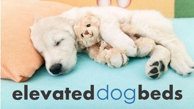 Las mejores camas para perros elevadas: 5 grandes opciones + comentarios