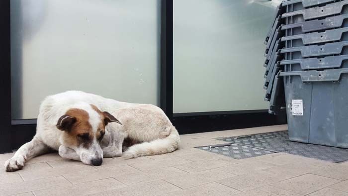 Piedra del azulejo para perros