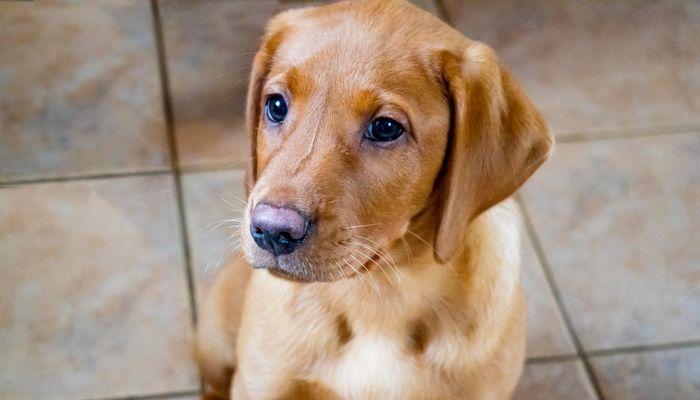 CerГЎmica o porcelana Azulejo de piso para perros
