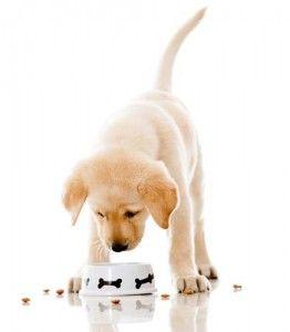alimentos para cachorros