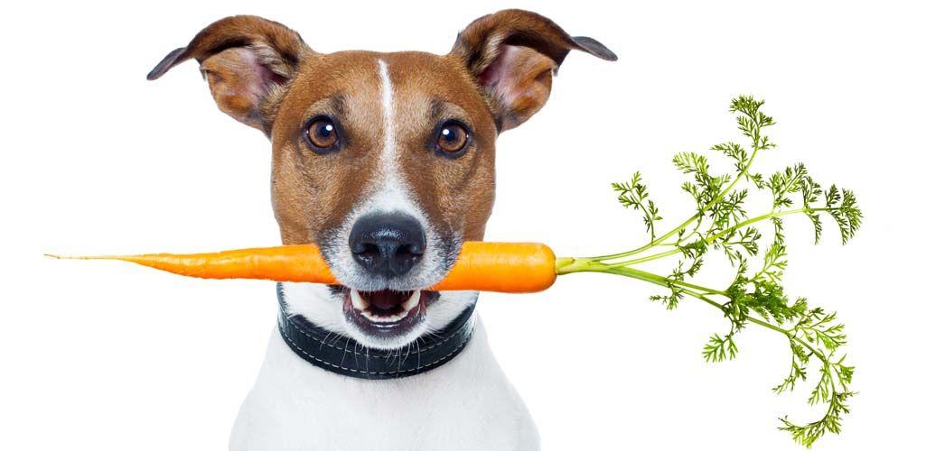Pautas de nutrición de alimentos para perros