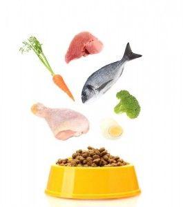 directrices alimentos para cachorros