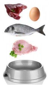 directrices de alimentos para perros adultos