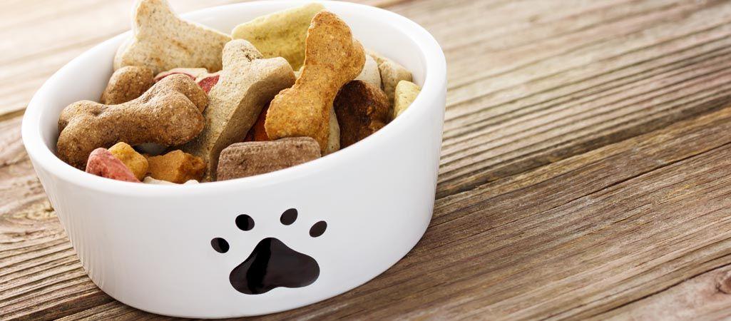 ¿Cuál es la comida de perro