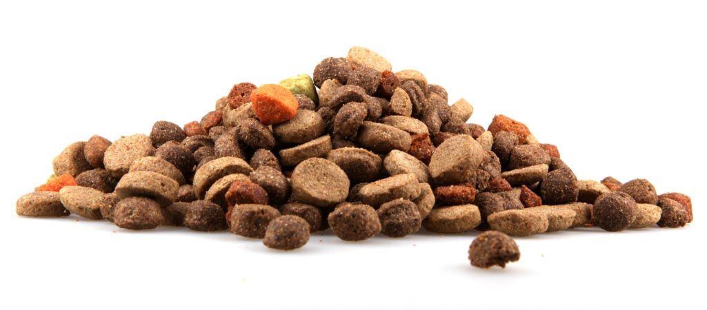 Tipos de alimentos para perros