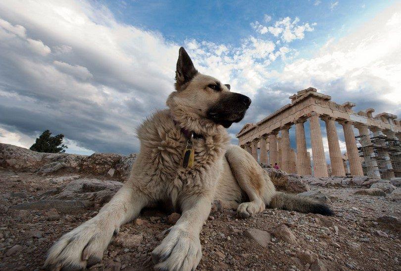 Los mejores perros de guardia para las familias: consejos sobre cómo garantizar su seguridad