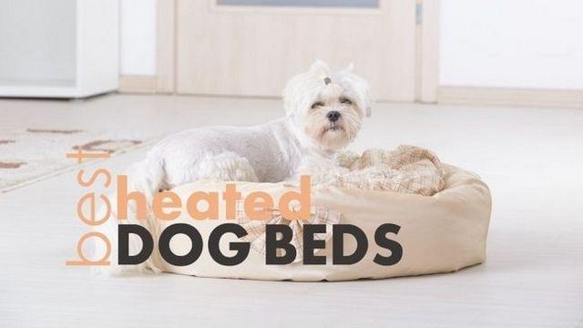 Las mejores camas para perros con calefacción: 4 camas calientes y mimosos para su cachorro