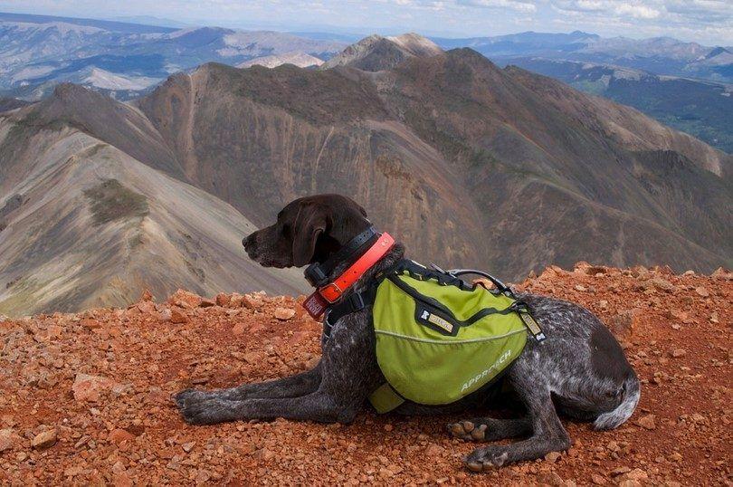 Los mejores perros de montaña: las mejores razas para excursionistas y personas activas