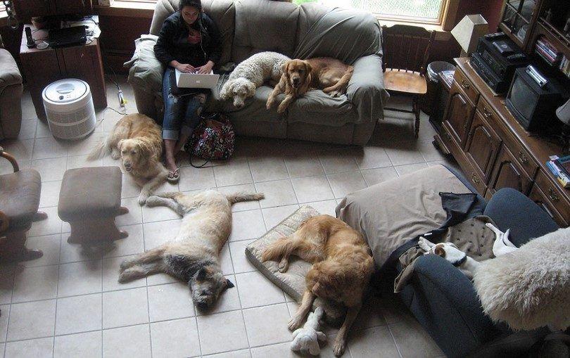 Los mejores perros de la casa: los mejores compañeros caninos para usted y su hogar