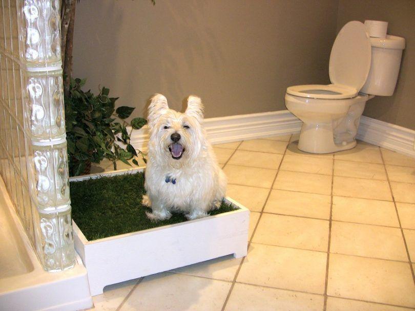 Mejor ir al baño perro de interior: una revisión de los mejores diseños orinal perro de interior