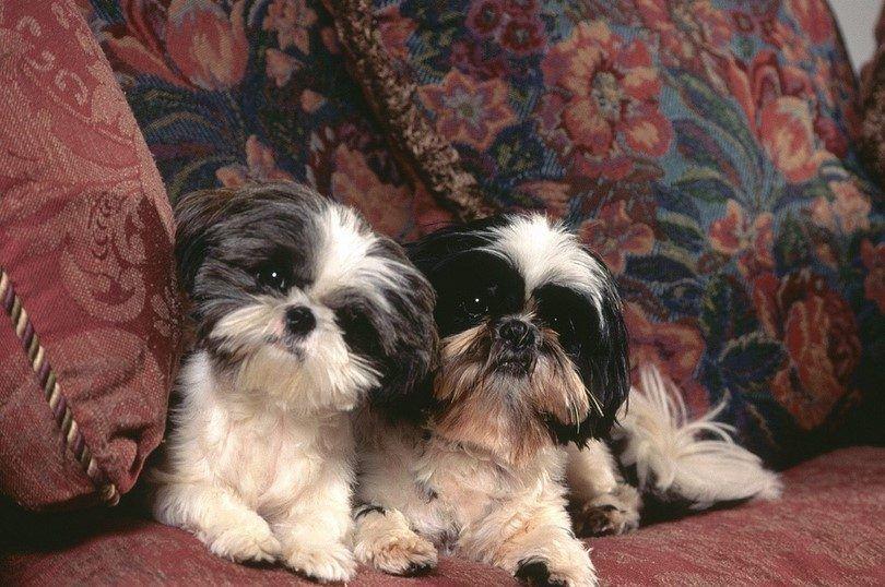 Perros en interiores